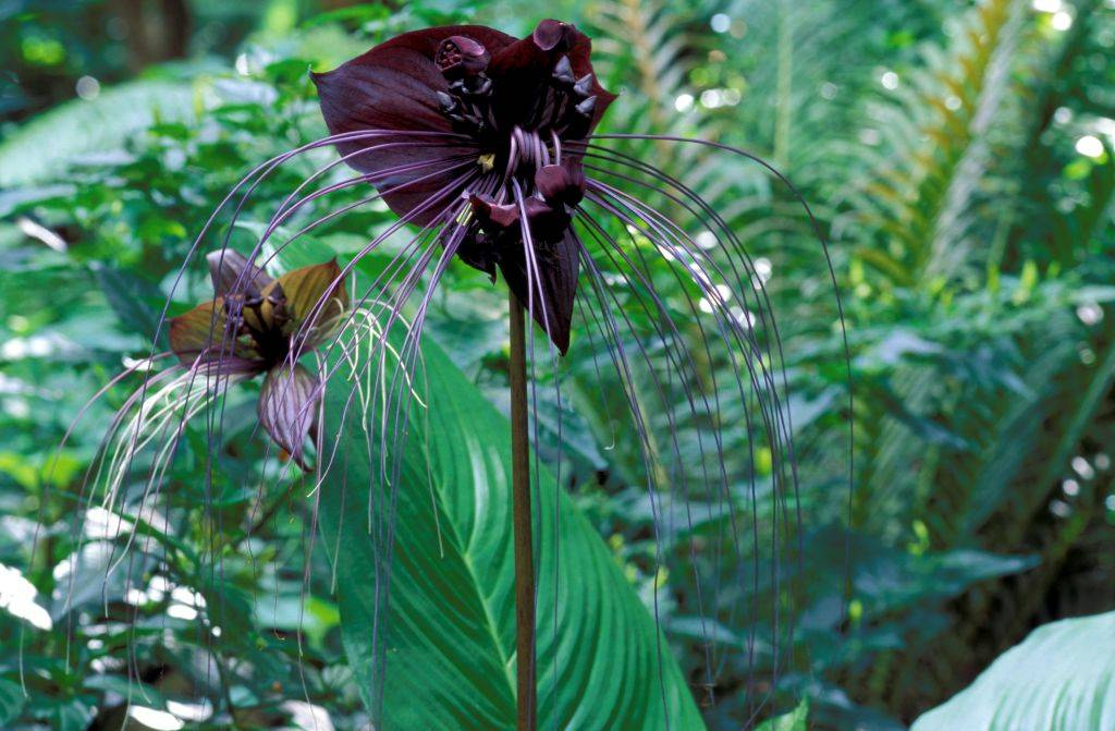 a black flower shaped like a bat