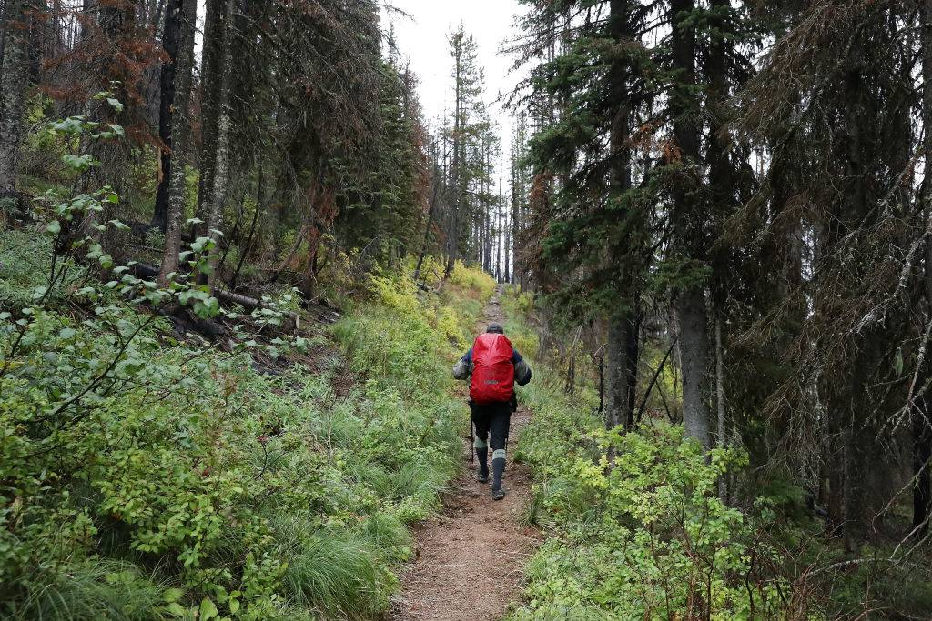 a backpacker with a red backpack walking in a forest along the continental divide trail in glacier national park in montana