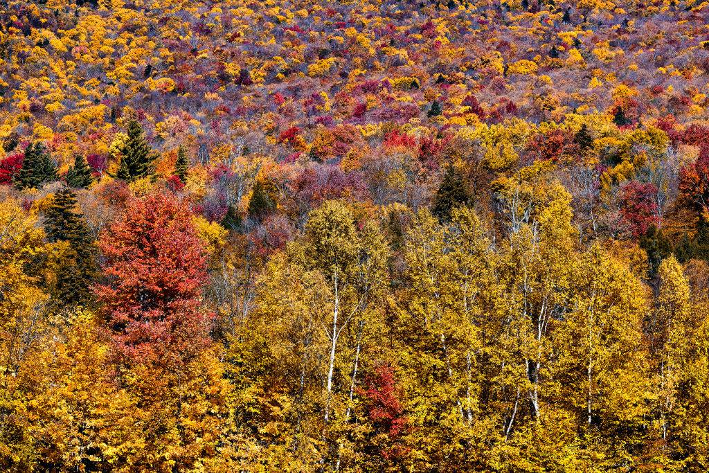 colorful trees along the long trail in vermont