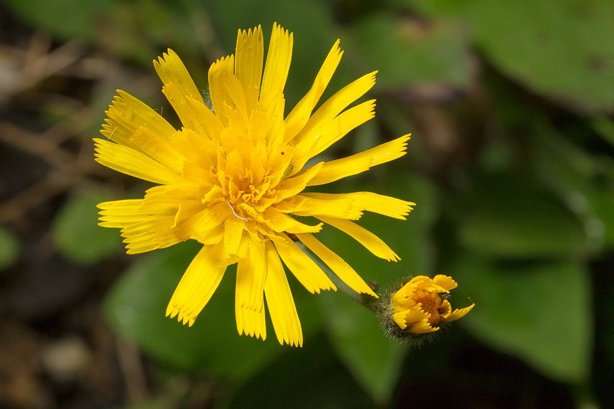 a yellow flower with petals that look like ribbons