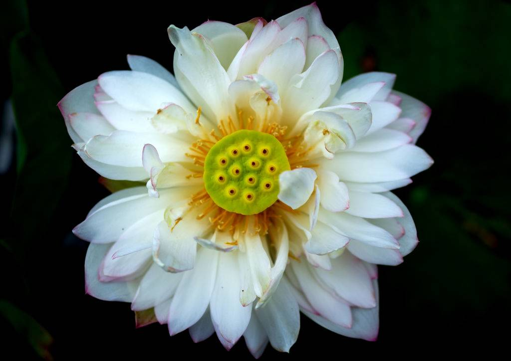 a white flower with a green center with yellow spots