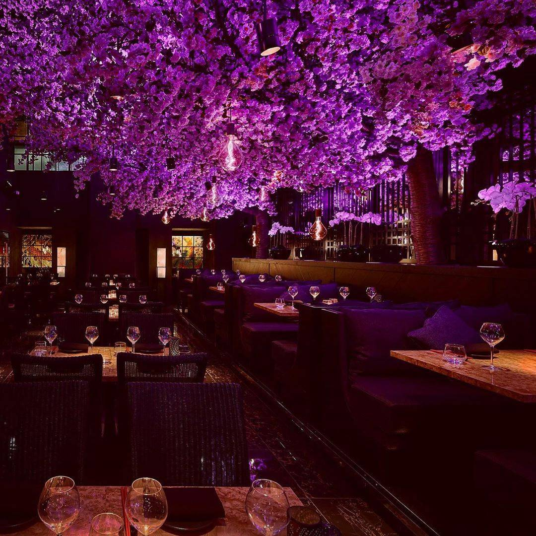glowing purple tree illuminates dining room
