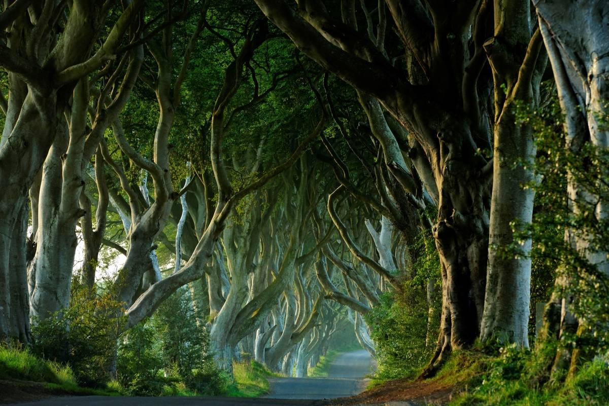 northern ireland dark hedges