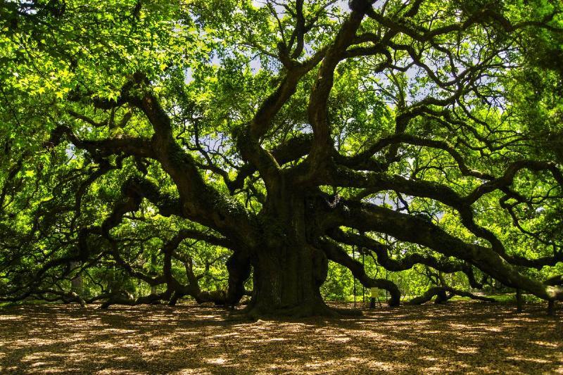 angel oak johns island south carolina