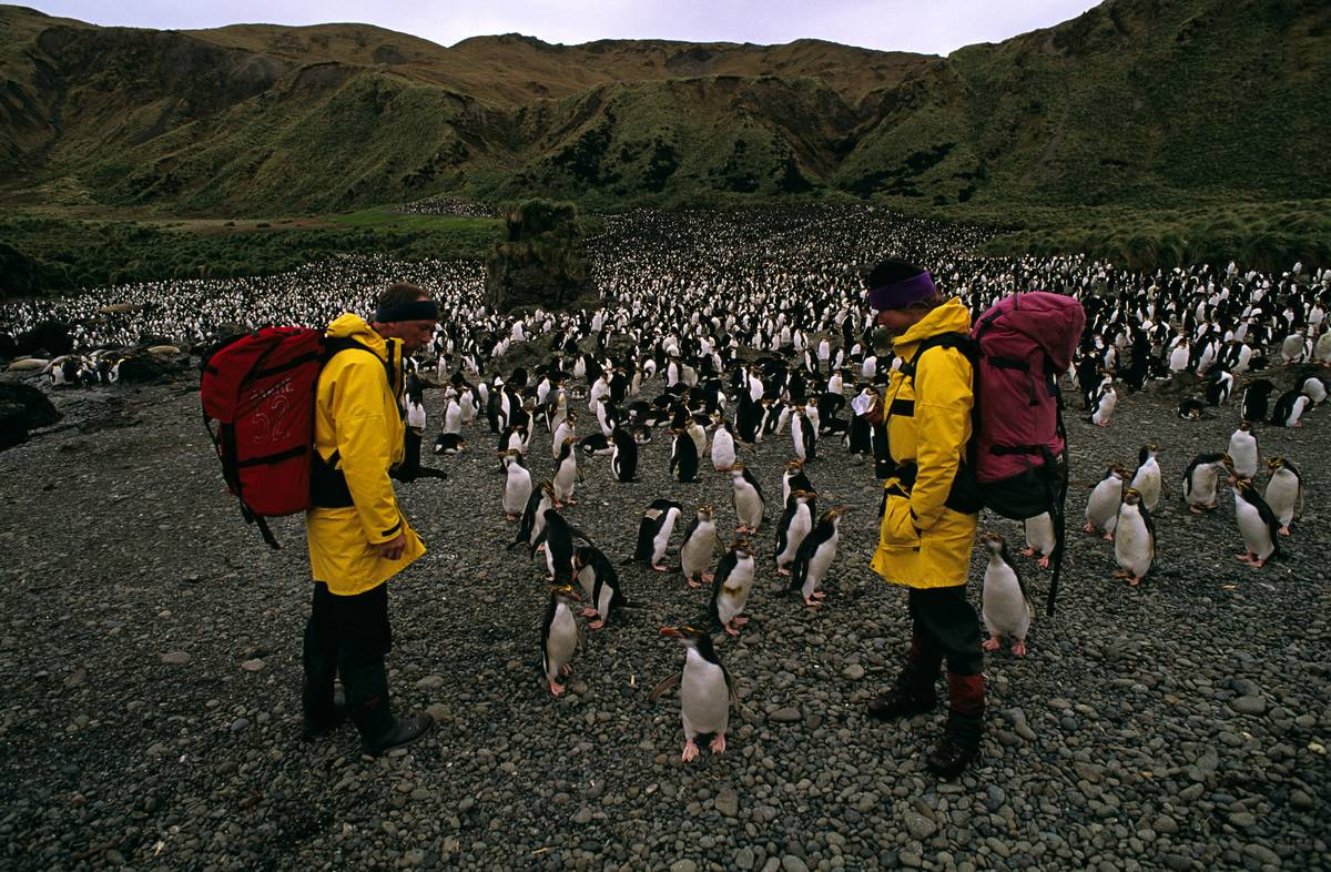 Expeditioners encounter penguins on Macquarie Island.