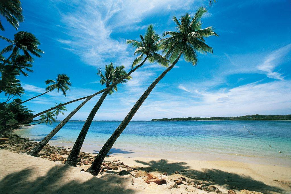 a view of a  beach with palm trees in fiji