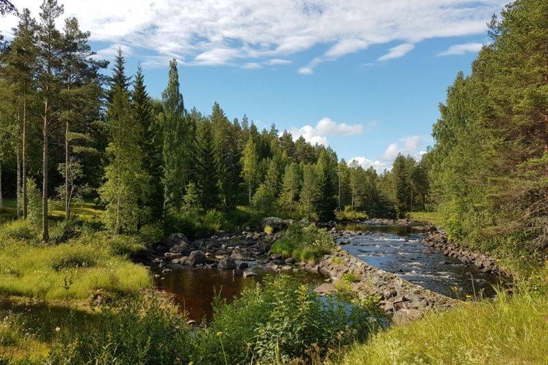 beautiful Swedish forest