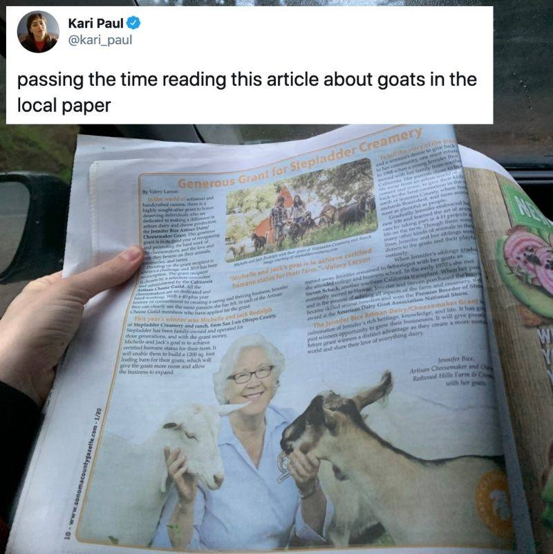 Tweet: passing the time reading this article about goats in the local paper