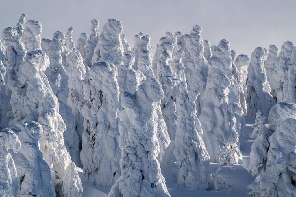 Mount Zao snowy trees