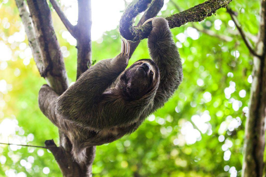 a sloth in a tree