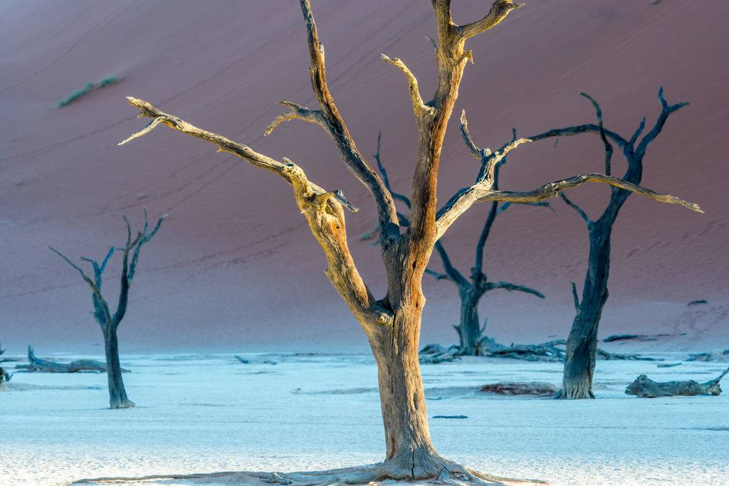 Dead acacia trees in Namibia