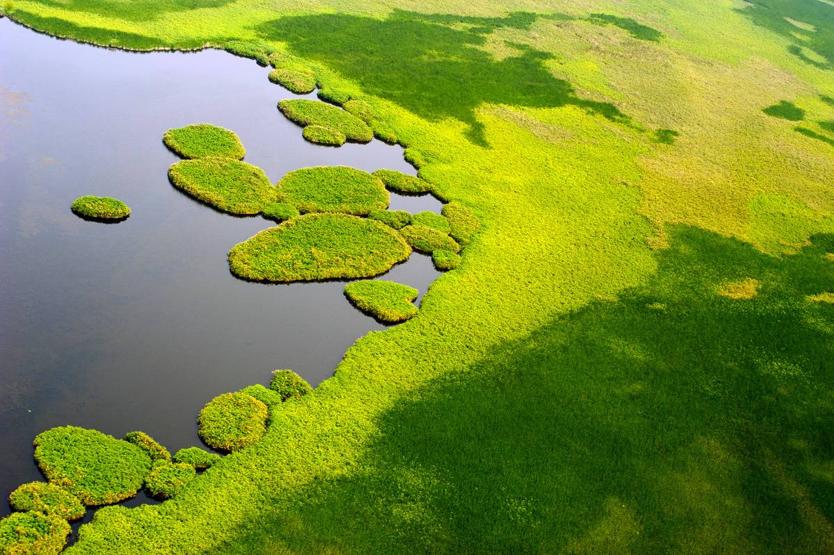 An aerial picture shows Islands jutting out into a lake amid the vast swamplands of the Sudd