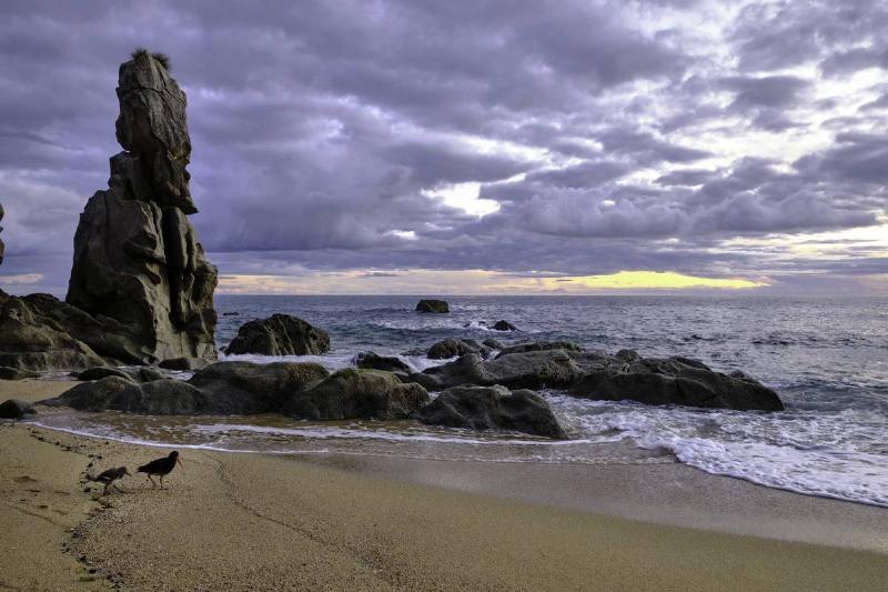 anapai beach new zealand