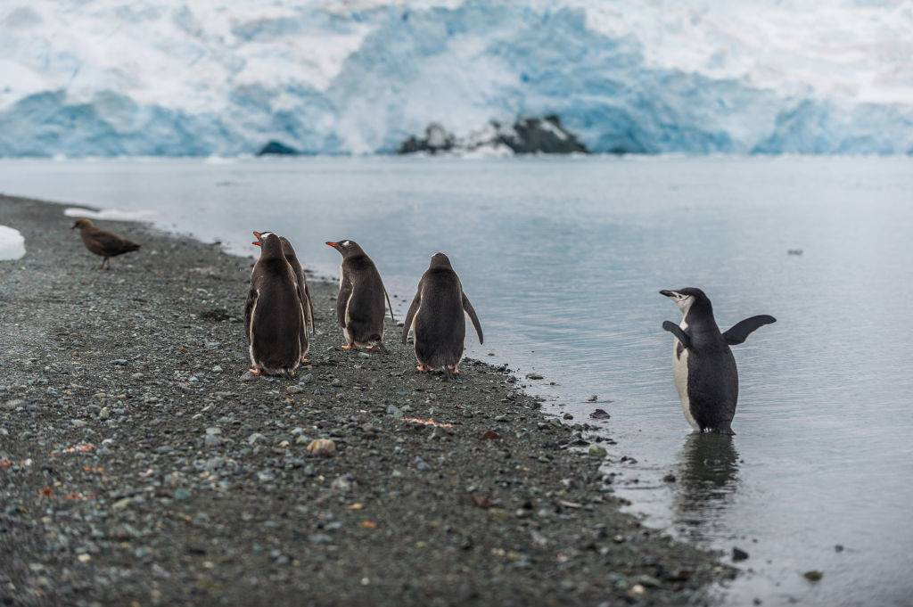 a bunch of penguins
