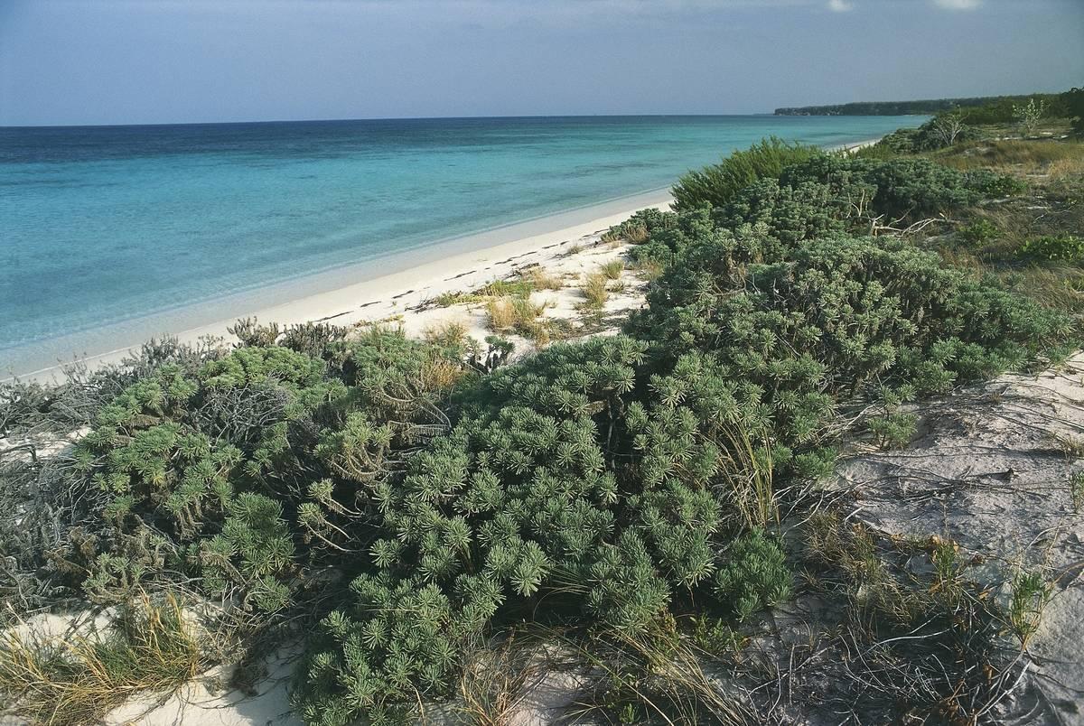 las aguilas beach dominican