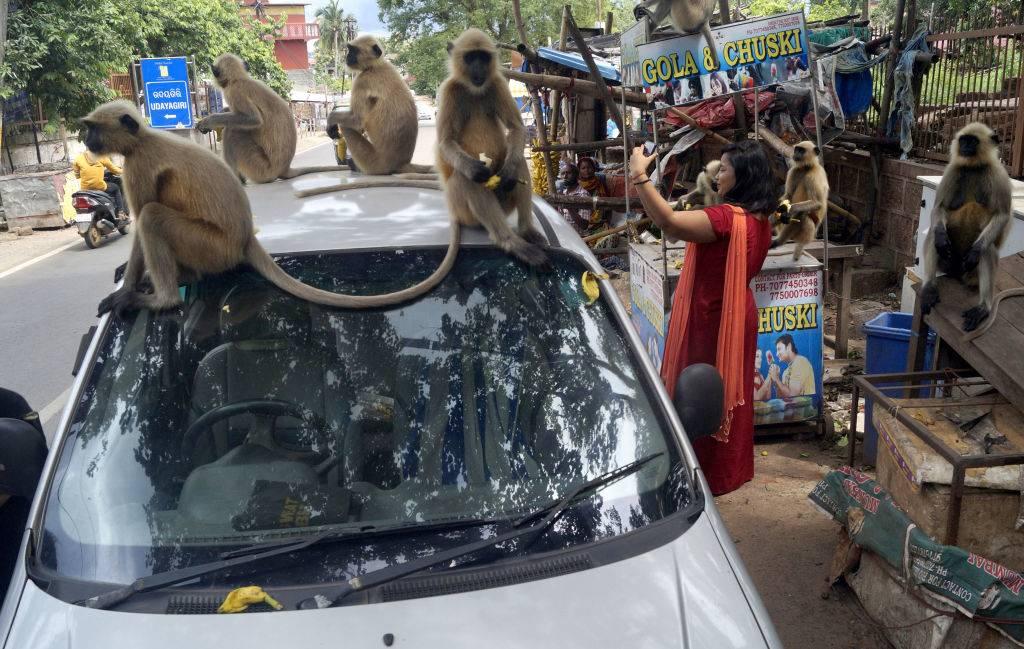 monkeys sitting on top of a car