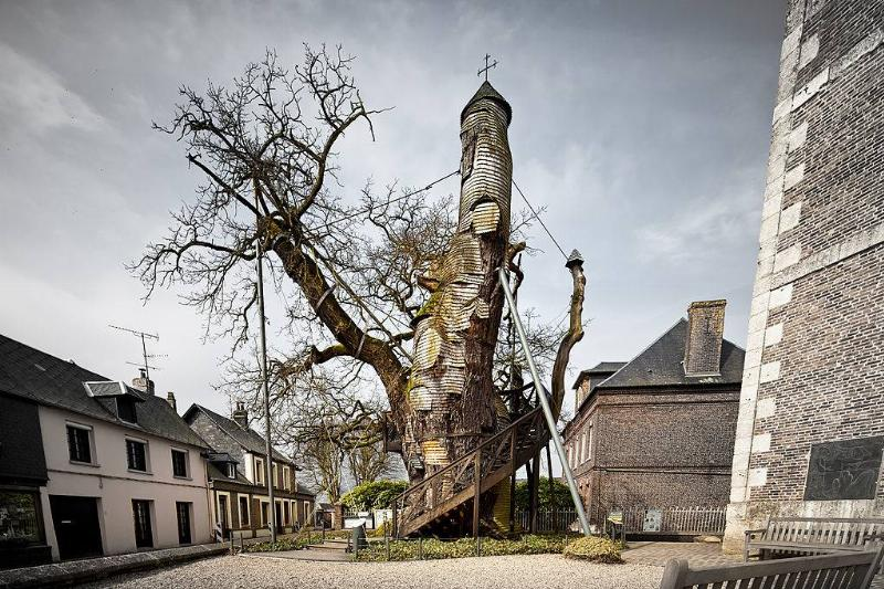 a tree that is growing out of a church