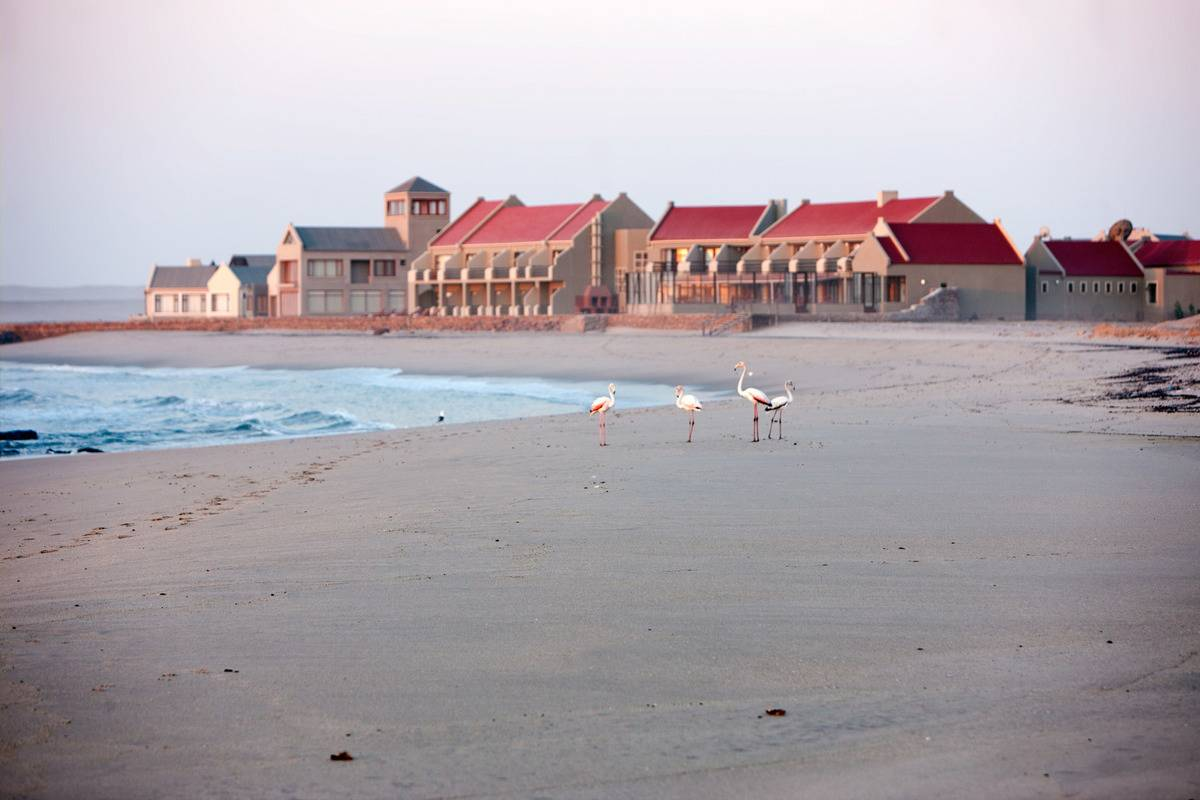 flamingos on beach in front of buildings with red roofs