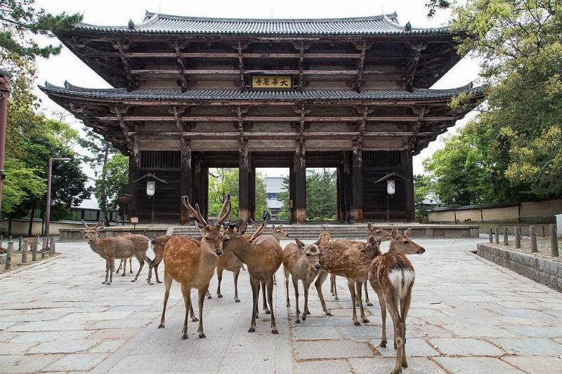Deer in Nara Park in Japan