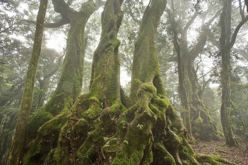 the Antartica beeches in Wales