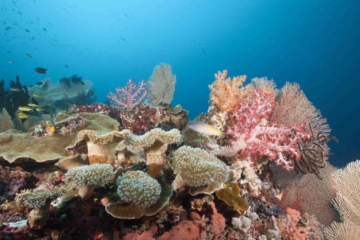 florida barrier reef scene