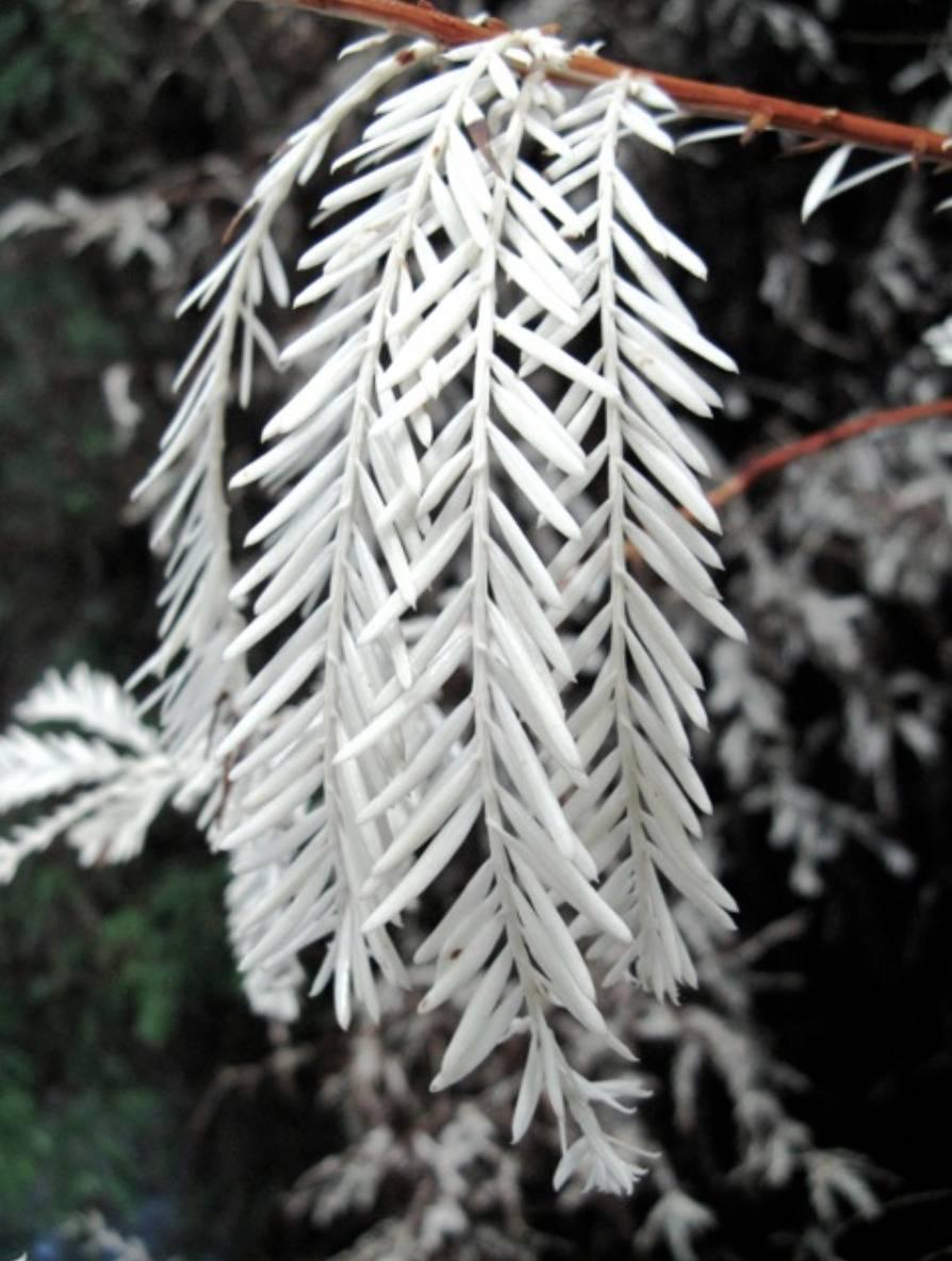 white leaves on tree