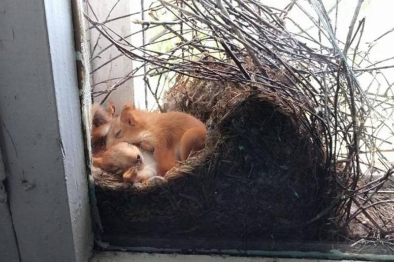 nest full of squirrels cuddling