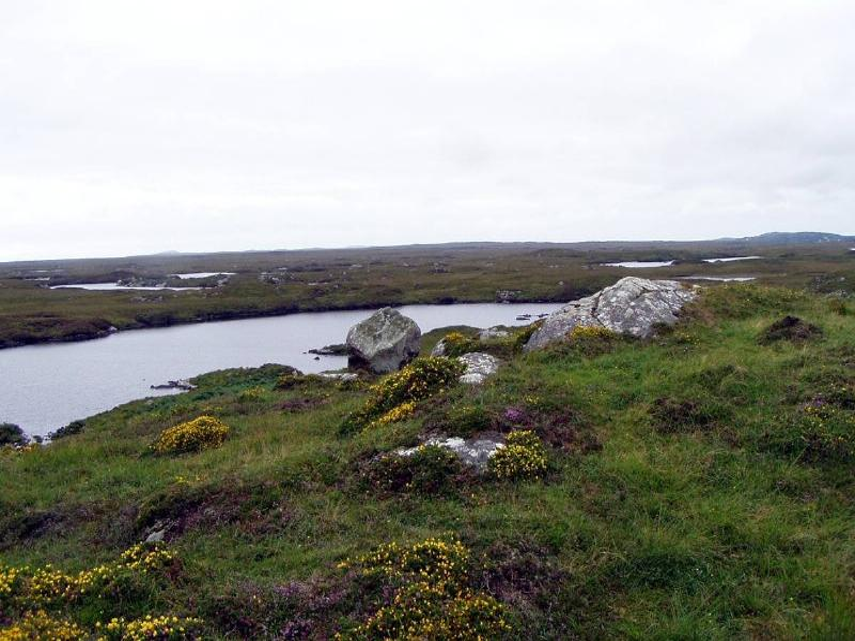 bog in Ireland