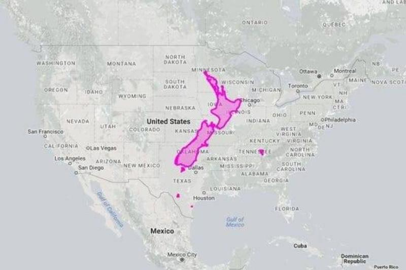 New Zealand Is Very Small Compared To The United States