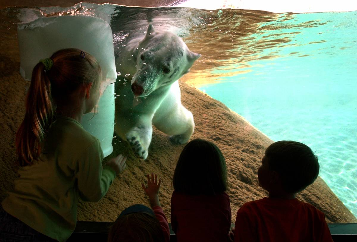 children with polar bear at denver zoo