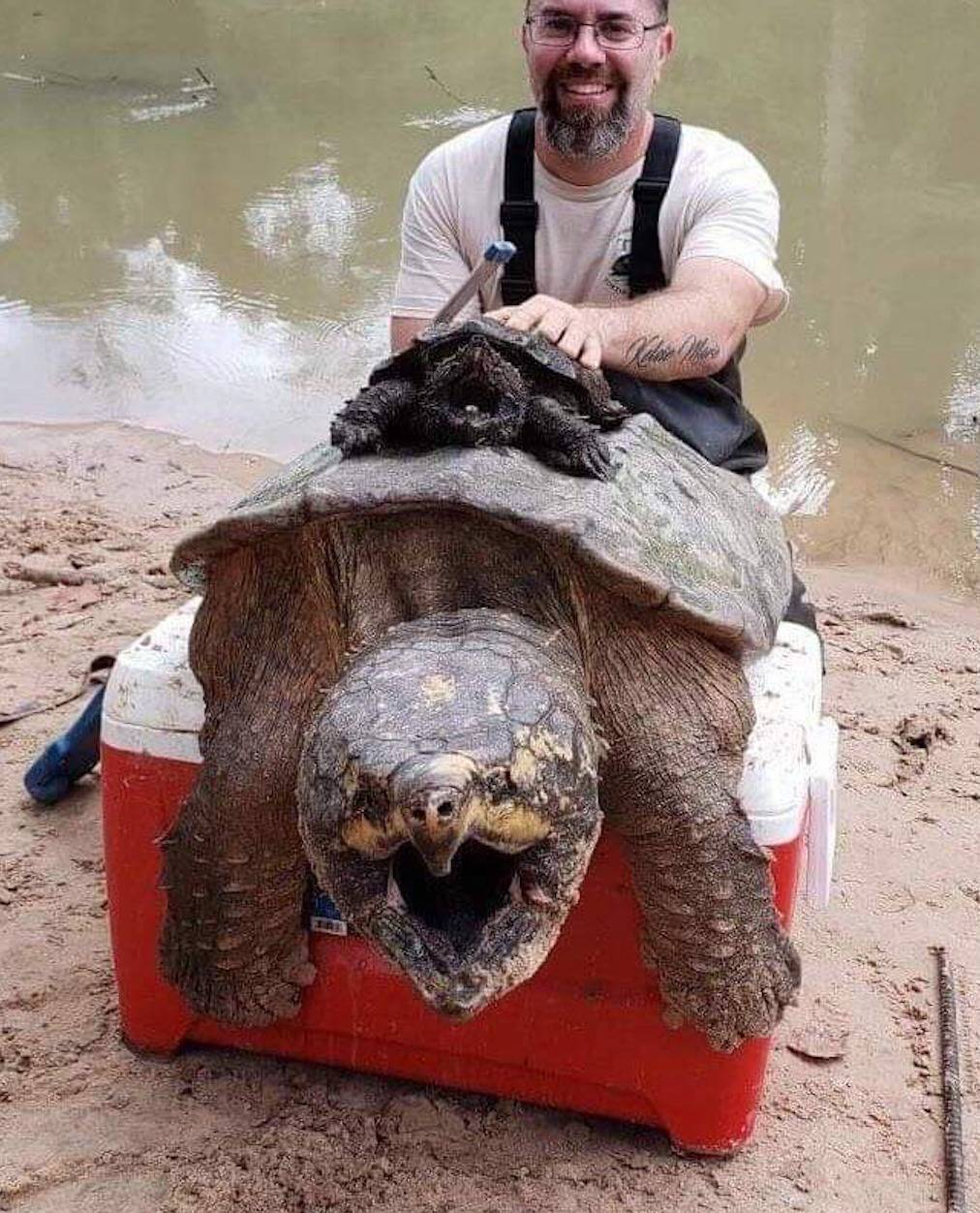 man with small snapping turtle and Much larger snapping turtle