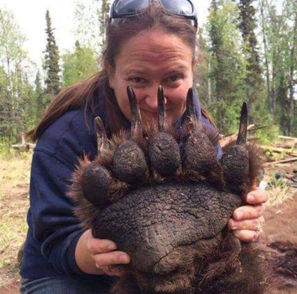 woman holding up bear paw that is twice the size of her head