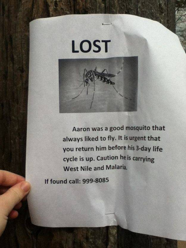 A sign asks people to find a lost mosquito before it dies in three days.