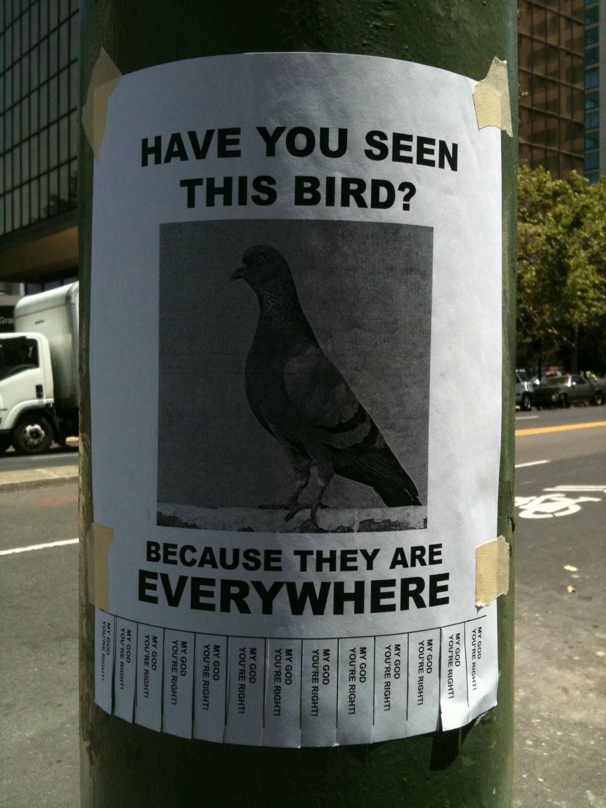 A sign points out that pigeons are everywhere.
