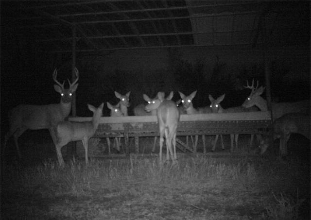 night meeting with the deer