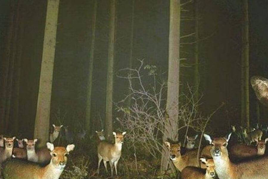 party deer looking at you