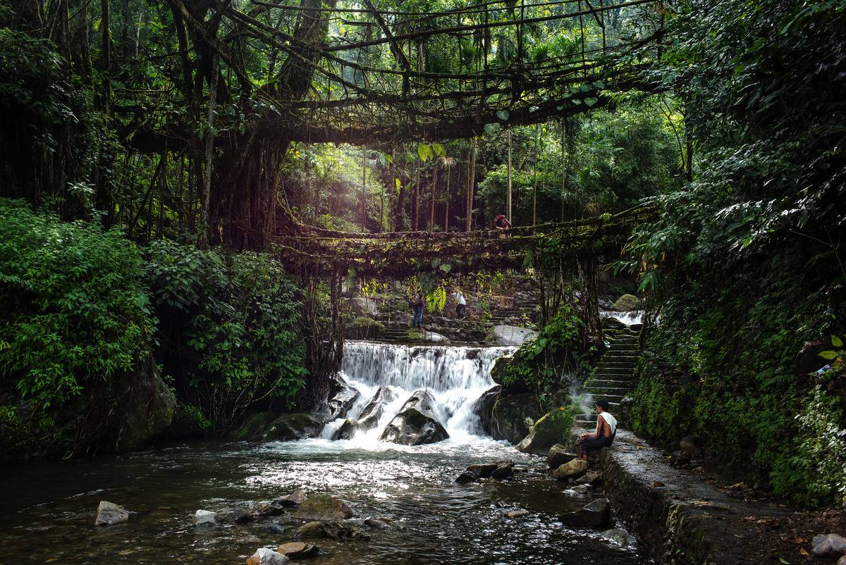 The Living Root Bridges Is Made Of Rubber Fig Tree Roots