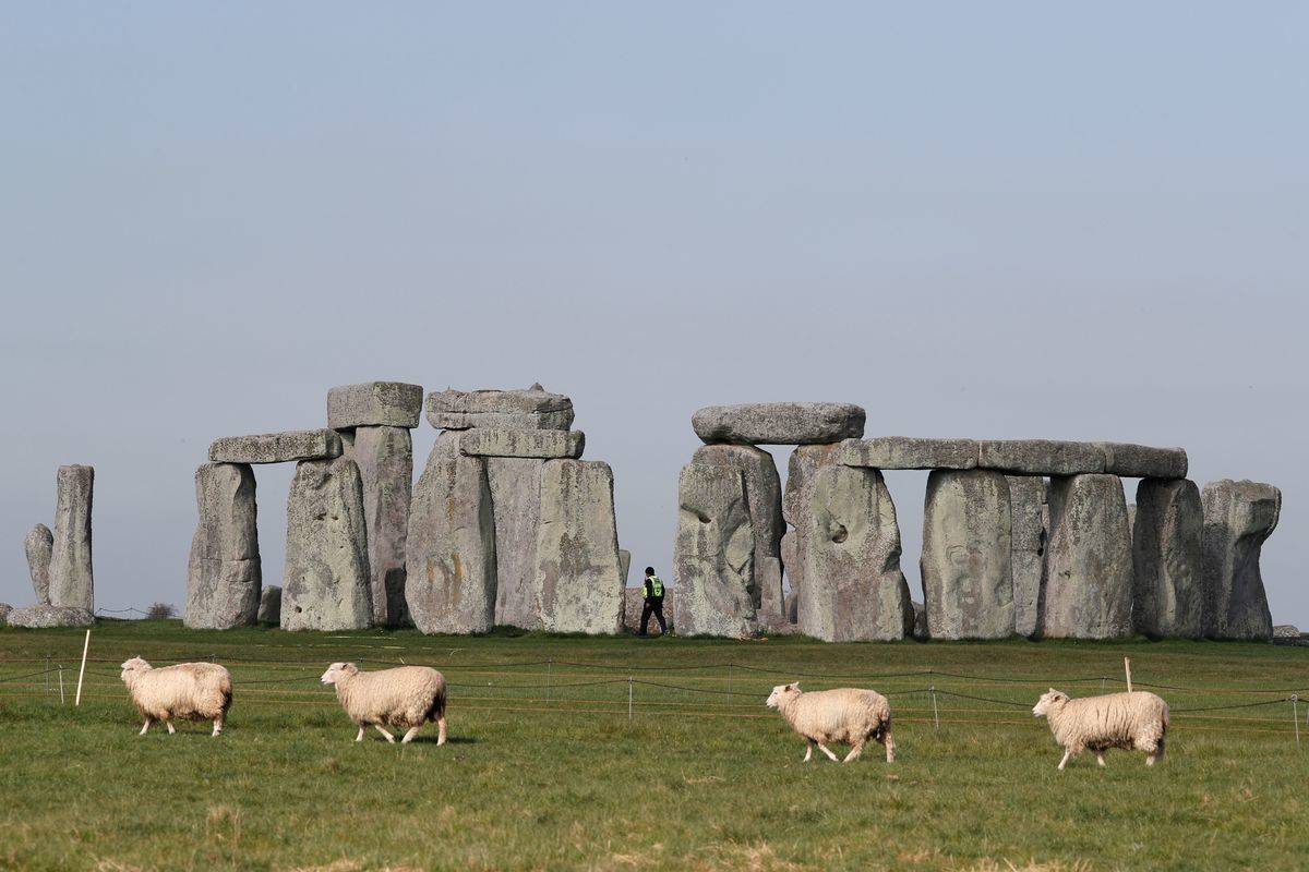 In 2020, sheep graze the fields of Stonehenge during lockdown.