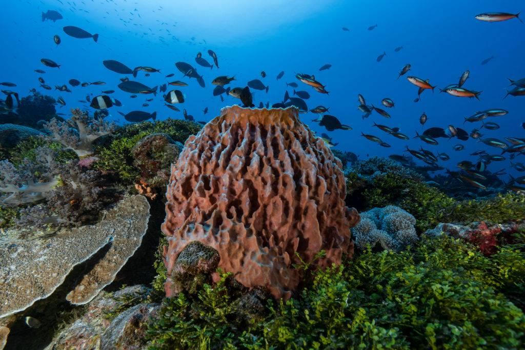 Picture of sea sponge