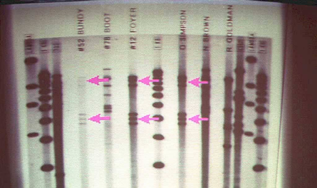A DNA film projects the codes of a person's DNA.