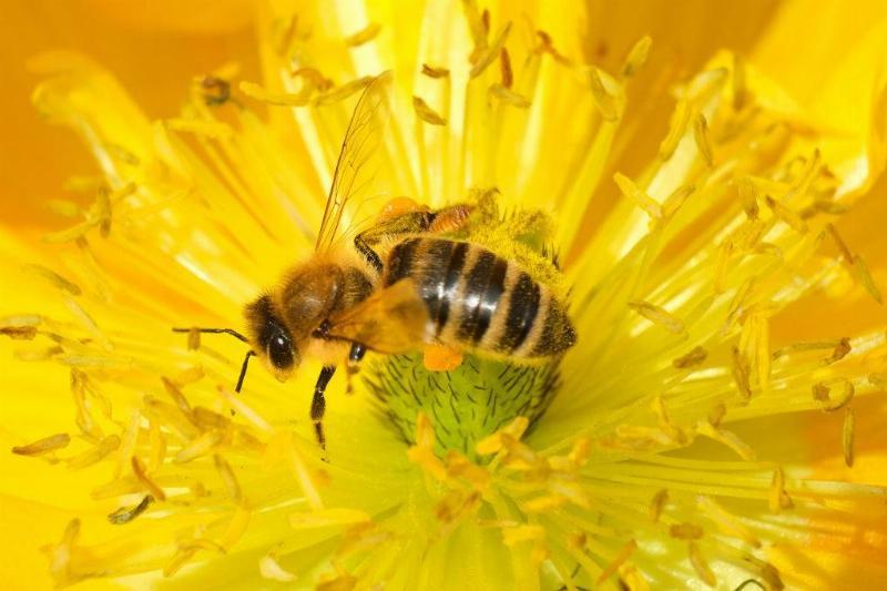 A bee scrambles across a flower