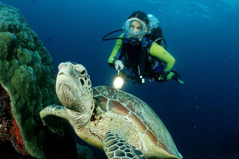 Green sea turtle and scuba diver, Chelonia mydas, Australia, Great Barrier Reef