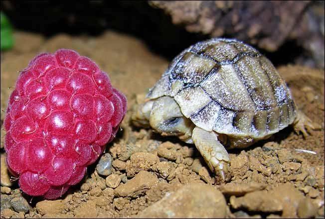 Turtles-Photo_-baby-turtles-97834