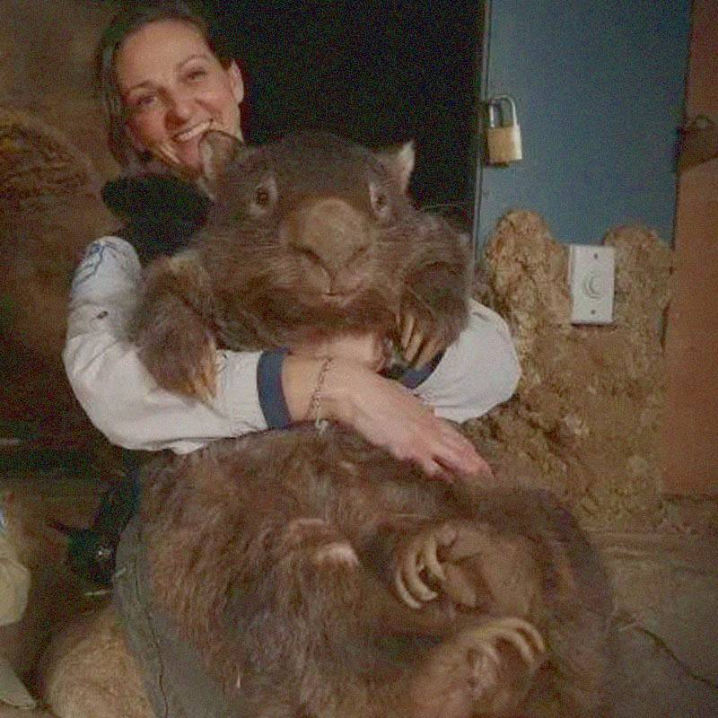 wombat-70106